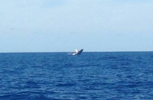 la foto ballena